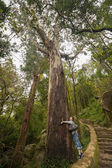 Amo a natureza. garota abraçar uma árvore de eucalipto gigante em sintra, portuga — Fotografia Stock