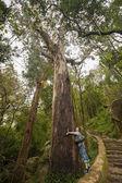 Hou van aard. meisje knuffel een reus eucalyptus boom in sintra, portuga — Stockfoto
