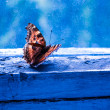Yellow butterfly on the blue background - Stock Photo