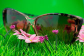 Glasses on green grass — Stock Photo