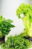 Arugula, salad and spinach — Stock Photo