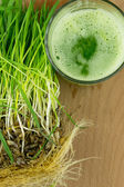 Green Organic Wheat Grass Juice ready to drink — Stock Photo
