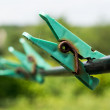 Green old clothespin in garden — Stock Photo