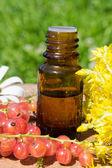 óleo essencial de flores amarelas — Foto Stock