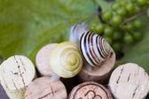 Escargots sur les bouchons de vin dans un jardin d'été — Photo