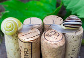 Snails on wine corks in a Summer Garden — Stock Photo