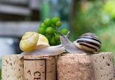 Snails on wine corks in a Summer Garden — Foto Stock