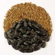 Stock Photo: Sunflower and brown seeds