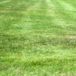 Green fresh grass — Stock Photo #29055863