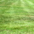Green fresh grass — Stock Photo