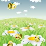 蜂蜜の蜂とデイジー フィールド — ストックベクタ