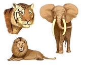 Elephant, lion, tiger (illustration) — Stock Photo