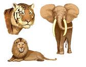 Elephant, lion, tiger (illustration) — Stock Photo
