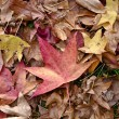 Autumn, fall leaves — Stock Photo