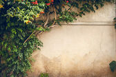 Flowers and green plant on old wall — Stock Photo