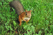Squirrel in the park — Stock Photo