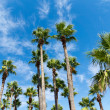 Foto Stock: Palm trees against sky