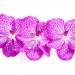 Stock Photo: Pink Orchid flowers on white background
