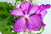 Beautiful pink bouquet of orchids — Stock Photo