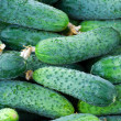 Stock Photo: Green cucumbers