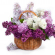 Lilacs in basket — Stock Photo #22254373
