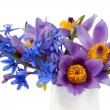 Bouquet of purple pasque flowers in vase on white background - Stock Photo