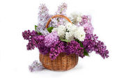 Lilacs in a basket — Stock Photo