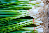 Bunches of green onions on display at a farmers' market — Stock fotografie