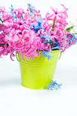 Beautiful pink and blue hyacinth in vase. — Stock Photo