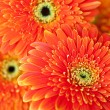 Stock Photo: orange gerbera flower