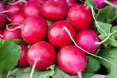 Red radishes found at a farmer's market — Stock Photo