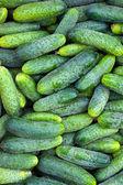 Cetrioli verdi presso un mercato rionale — Foto Stock