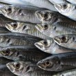 Several fresh sea horse mackerel - Stock Photo