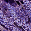 Dried lavender flowers — Stock Photo #23091444