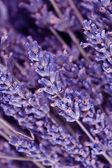 Dried lavender flowers — Stock Photo