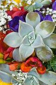 Beautiful bouquet of freesias, succulent, gypsophila — Stock Photo