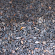 Black sesame seeds — Stock Photo