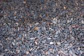 černá sezamová semínka — Stock fotografie