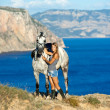 Stock Photo: Beautiful girl with the horse on the sea shore. Horsewoman