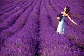 Beautiful Bride in wedding day in lavender field. Newlywed woman in lavender flowers. Young woman in wedding dress outdoors. — Foto de Stock