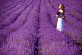 Beautiful Bride in wedding day in lavender field. Newlywed woman in lavender flowers. Young woman in wedding dress outdoors. — ストック写真