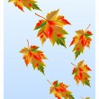 Maple leaves gone with wind — Stock Vector #21308713