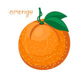 Fruto da laranjeira — Vetor de Stock