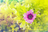 Summer flower Cultivar with a color filter — Stock Photo