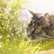 Cat sniffing grass — Stock Photo