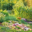 Sunny rock garden  — Stock Photo