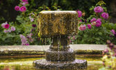 Antique fountain on background of roses — Stock Photo