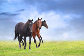 Three warmblood horses on field — ストック写真
