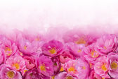 Background of pink roses — Stockfoto
