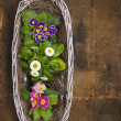 White Basket with spring flowers in pots on old wooden table , top, view — Stock Photo